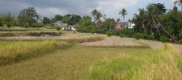 Quiet and Beautiful Ricefield View Land in Pererenan for Villa