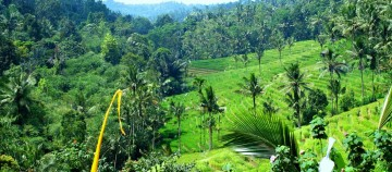Terrace Ricefield View Waterfall Land in Tabanan Bali for Sale
