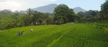 Ricefield Land for Sale in Alasangker Buleleng Northern Bali